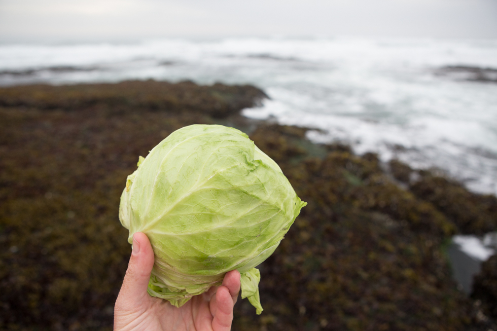 sea kraut seaweed sauerkraut recipe